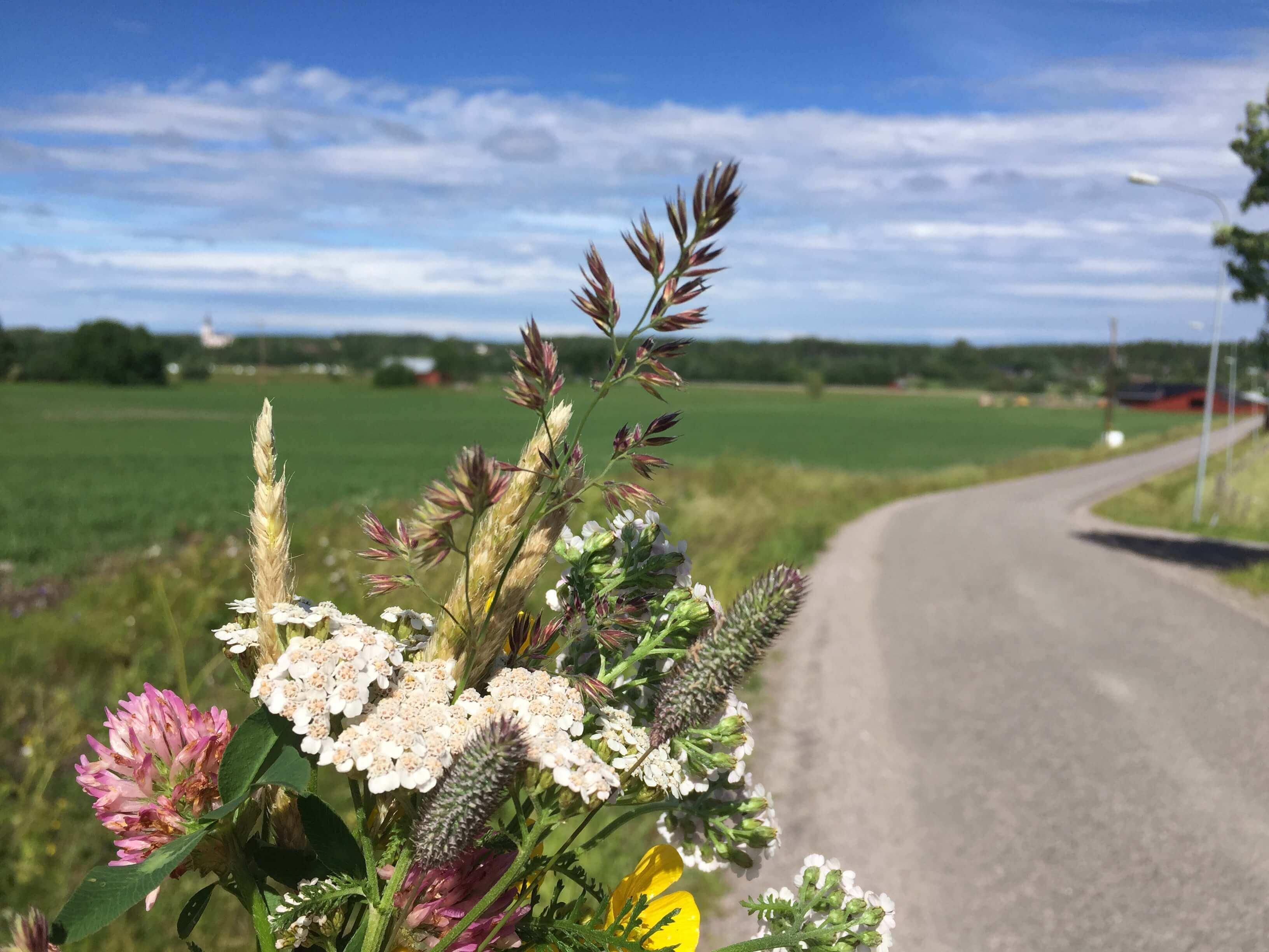 Midsummer In The Swedish Countryside Traversing Territories