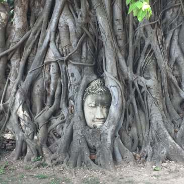 Buddha Head in Ayutthaya, Thailand