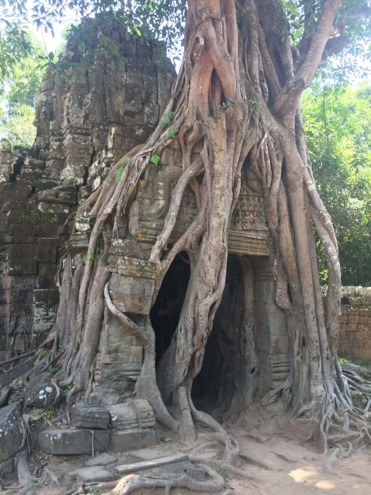 Tree Growing on a Temple Entrance in Angkor, Cambodia
