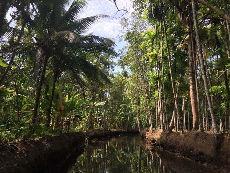 Narrow Canal in the Backwaters of Kerala, India