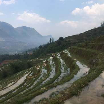 Sapa Rice Terraces, Sapa, Vietnam