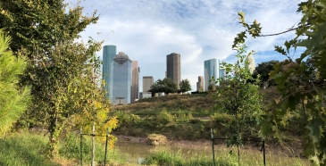 Houston Skyline and Buffalo Bayou
