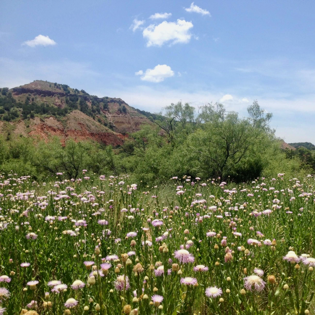 Flowers in Palo Duro Canyon, Texas
